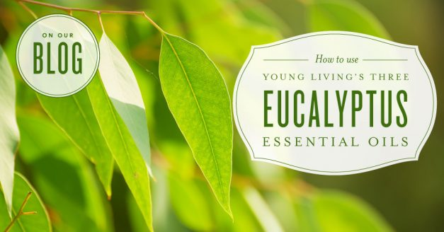 How to use Eucalyptus essential oils